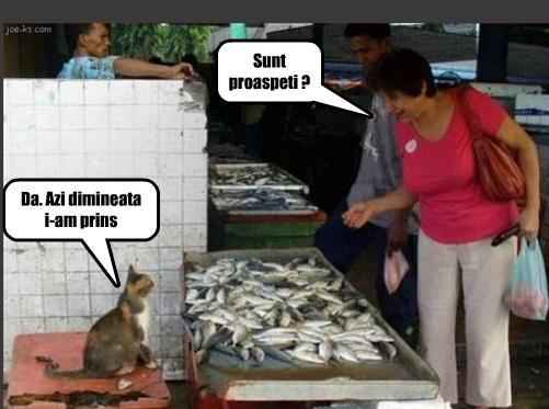 pisica vinde peste